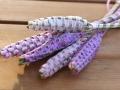 Lavendel_Staebe07