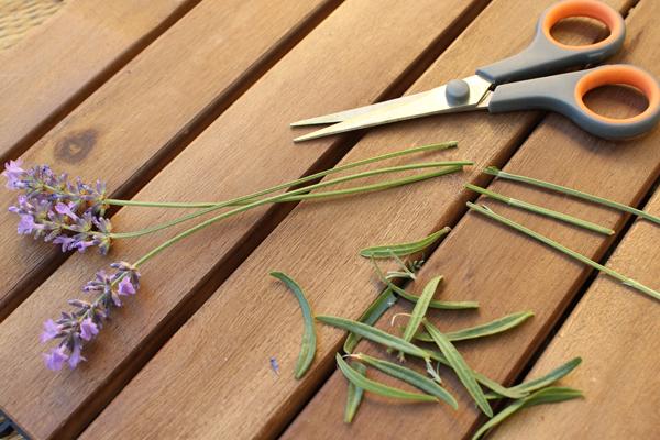 Lavendel_Stern02