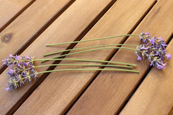 Lavendel_Stern03