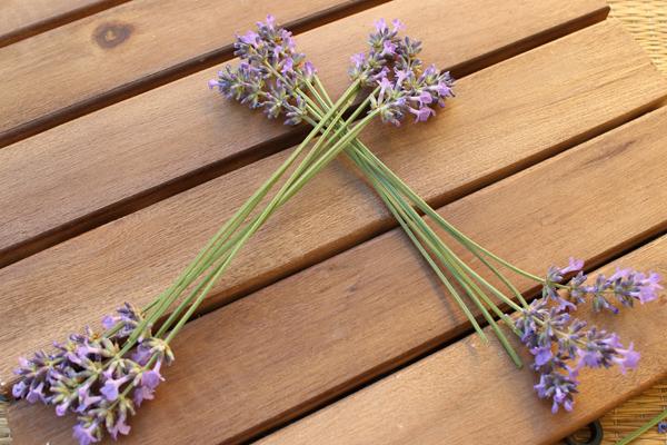 Lavendel_Stern04
