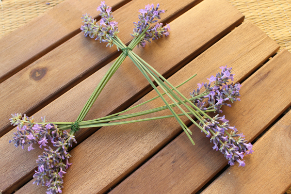Lavendel_Stern06