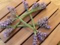 Lavendel_Stern08