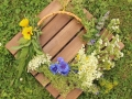 Wiesenblumen07