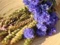 Wiesenblumen17