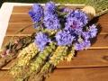 Wiesenblumen18